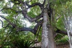 fleming-arboretum-bob-howdy-native-plants-flowers-005