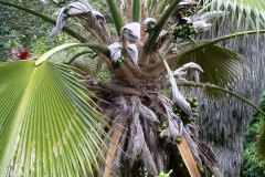 fleming-arboretum-bob-howdy-native-plants-flowers-008