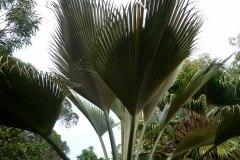fleming-arboretum-bob-howdy-native-plants-flowers-009