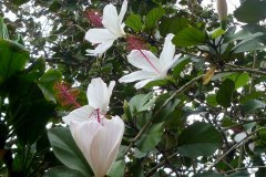 fleming-arboretum-bob-howdy-native-plants-flowers-012
