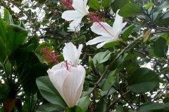 fleming-arboretum-bob-howdy-native-plants-flowers-015