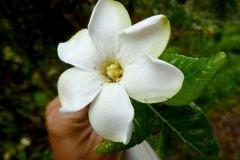 fleming-arboretum-bob-howdy-native-plants-flowers-020