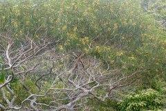 fleming-arboretum-bob-howdy-native-plants-flowers-021