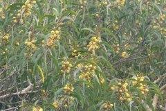 fleming-arboretum-bob-howdy-native-plants-flowers-022