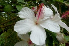 fleming-arboretum-bob-howdy-native-plants-flowers-023