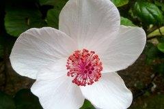 fleming-arboretum-bob-howdy-native-plants-flowers-024
