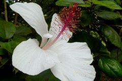 fleming-arboretum-bob-howdy-native-plants-flowers-025