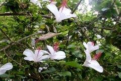 fleming-arboretum-bob-howdy-native-plants-flowers-027