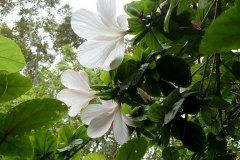 fleming-arboretum-bob-howdy-native-plants-flowers-028
