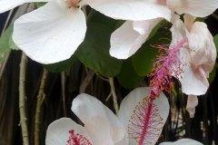 fleming-arboretum-bob-howdy-native-plants-flowers-029