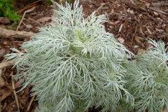 fleming-arboretum-bob-howdy-native-plants-flowers-032