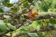 fleming-arboretum-bob-howdy-native-plants-flowers-034