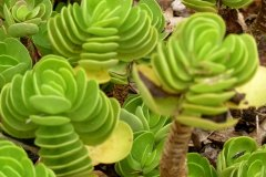 fleming-arboretum-bob-howdy-native-plants-flowers-037