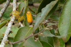 fleming-arboretum-bob-howdy-native-plants-flowers-038