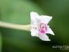PuuMahoe_PhotoAubreyHord_002