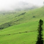 {Click to Enlarge} Horses and riders enjoy the infinite view and rolling hills of Ulupalakua.