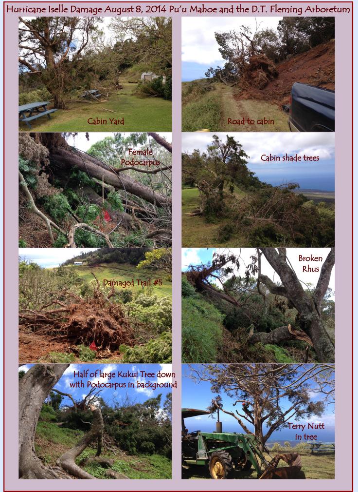 Hurricaineimages2014-736